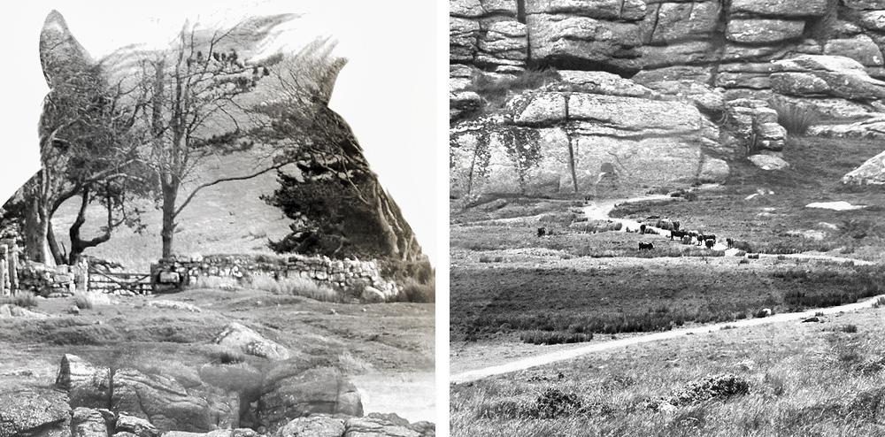 Dartmoor-Derby-branding-closeups1